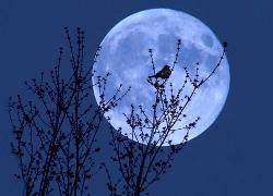 Суперлуние 1 августа 2 14 - самая большая Луна года