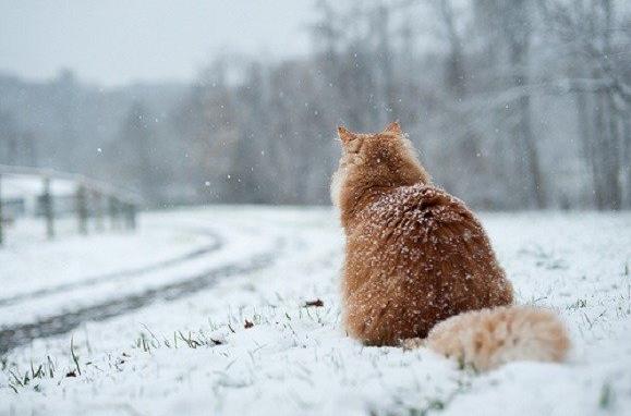 Фото: vesti-ukr.com