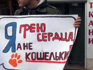 Защитники животных провели акцию перед магазином, где продавались кошачьи шкурки   DSC02375 300x225