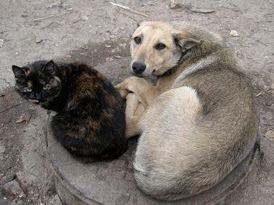 Новосибирские общественники намерены защищать животных на законодательном уровне
